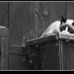 gato-001.jpg